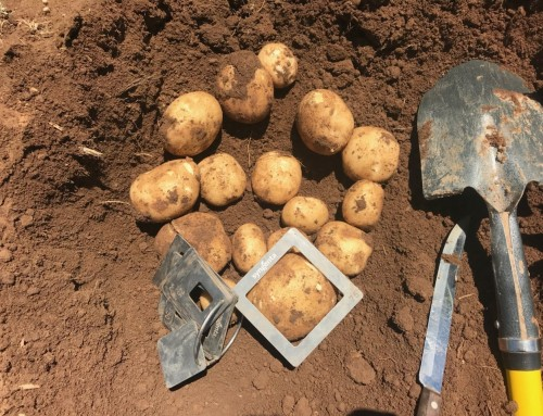 Potato Grower Services